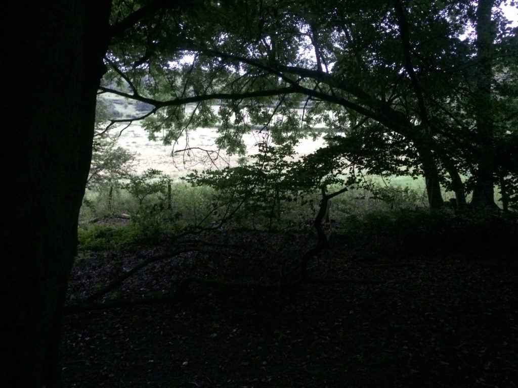 Ancient Woodland into Pasture land - Pippin & Gile - Bushcraft